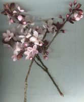 Stock: Sakura Branches by idolhands