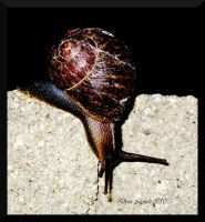 Night Snail by doraleepee