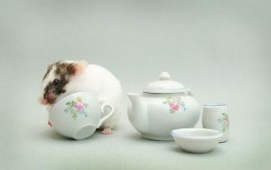 Hamster Tea Party by TamarViewStudio