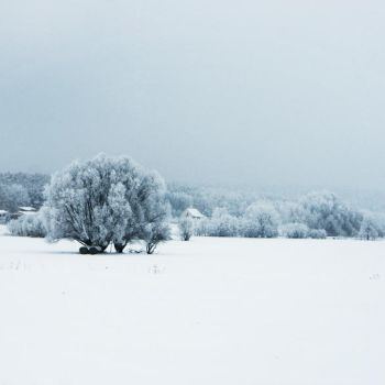 Covered in Snow and Ice by FeliDae84