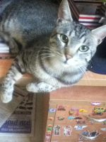 My Cat :D by lmsubscribing