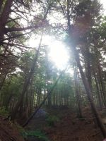 Into the Light - Victoria Park, Truro, NS by Naryndel