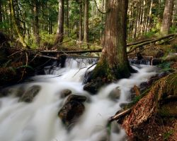 Flooded forest.. by GreatExposure