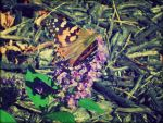 Awaiting Butterfly by Niimble