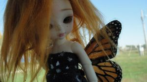 Monarch by clarinetplayer