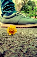 Shoe and flower by cazt1811