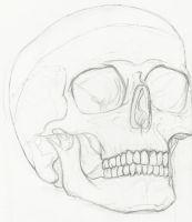 Skull Life Drawing by ElectricVISUALS
