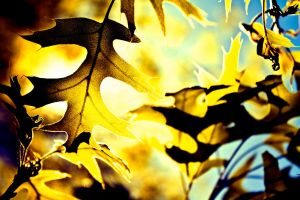 Colorful Leaves -1- by Michael-the-3rd