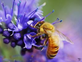 Bee on a Flower by AlopexXx