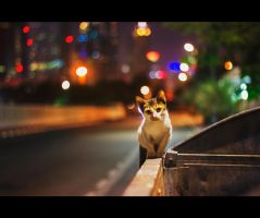 Urban Cats - 49 by MARX77