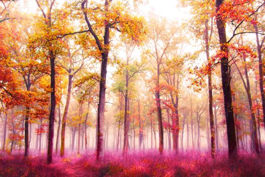 Forest in the Fog 3 by 6v4MP1r36