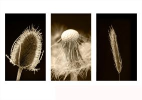 Wonderful weeds by bhoy