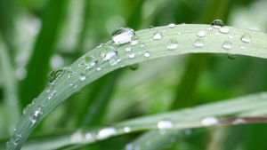 raindrops by evelynzee