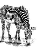 Randy the Zebra by 7and2