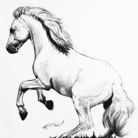 Andalusian by GabrielleC-Drawings