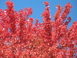 Autumn Reds 10 by Jyl22075