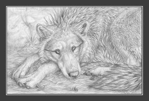 Untitled - Wolf laying by chenneoue