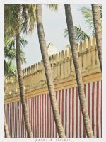 palms and stripes by galilla