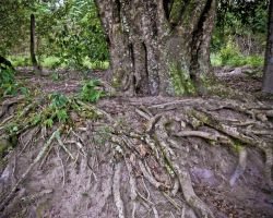 roots by lumarins