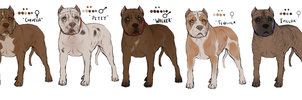 APBT Adopts // Draw to adopt! // ALL GONE by Serphire
