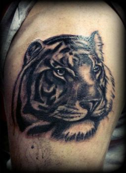 tiger by PoeticTragedy3