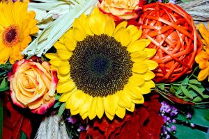 Sunflower4 by archaeopteryx-stocks