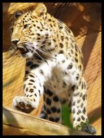 Leopard 1 by DeadlyDonna