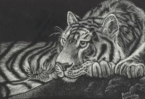 Tiger At Rest - scratch art by wildlifeart