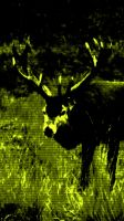 Red Deer At Bradgate by graphic-rusty
