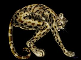 Margay by corvox