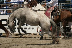 Bucking 002 by peachesrox-stock