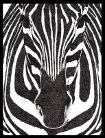 Zebra Symmetry by dzgutierrez