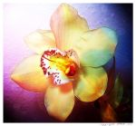 orchid blossom by tina1138