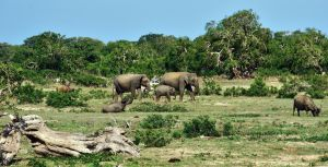 Yala National Park by CitizenFresh