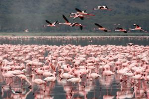 Flamingos are everywhere by myp55