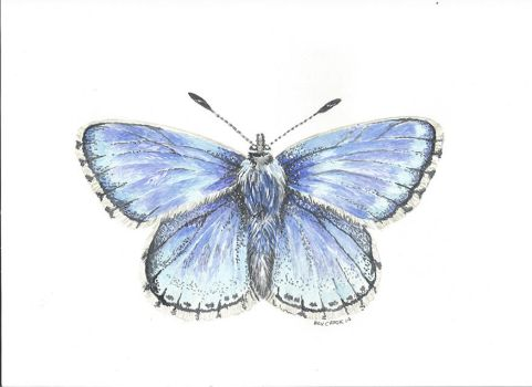 Adonis Blue by alter-ipse-amicus