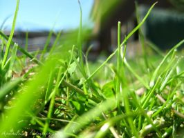 The Blades of Grass by ApachePower
