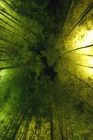 Bamboo Sky by Thrill-Seeker