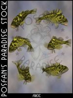 Animals 088 Pacific Rockfish by poserfan-stock