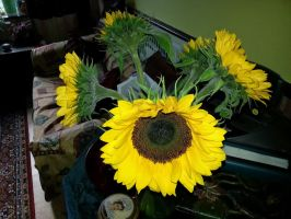 Sunflowers by Rozrr