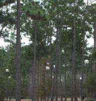 Tree line at school by Daato-Omata