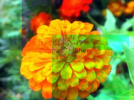 RGB superimposed flower by ThomasTheSpaceFox