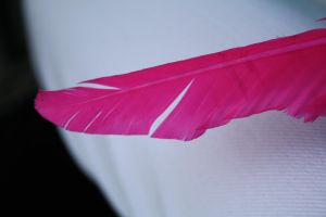 Feather by koco48