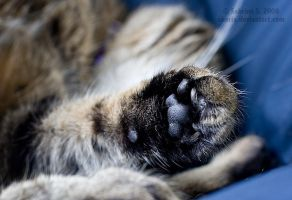 I has a foot by aheria
