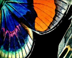 butterfly wing by April-Mo