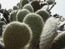 cacti 2 by Paul774