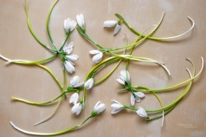 Snowdrops by marialivia16
