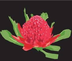 Waratah Flower by prudentia