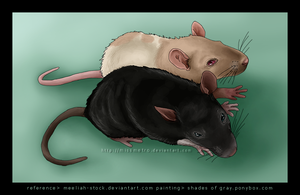 here are some rats by MissMetro