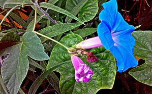 Blue Flower by Attani